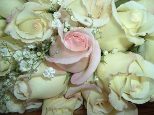 Pink and Cream Roses