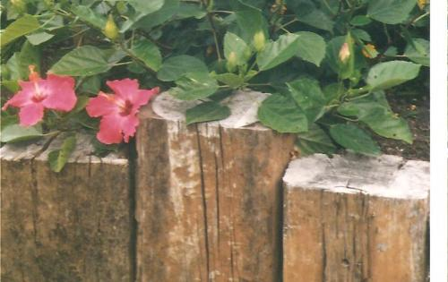 Flowers and Posts