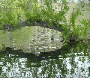 Heart Reflections